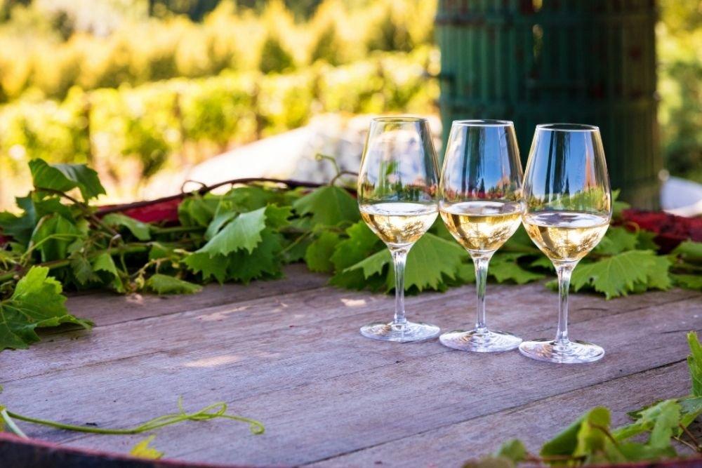 Italy's World Leading Organic Wines