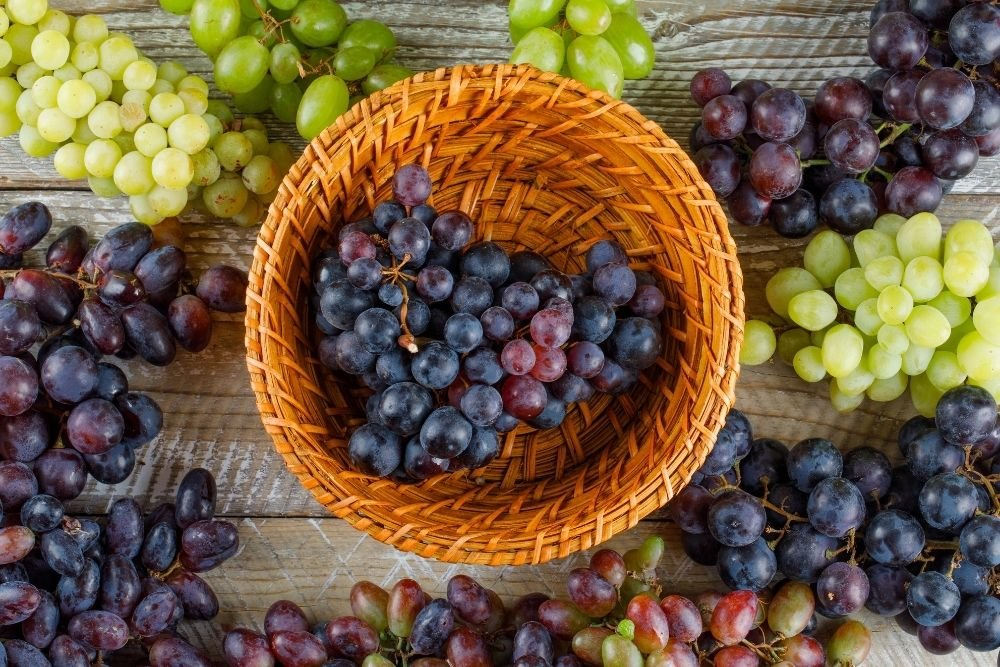 Grape harvest in Italy and around - the season is on!