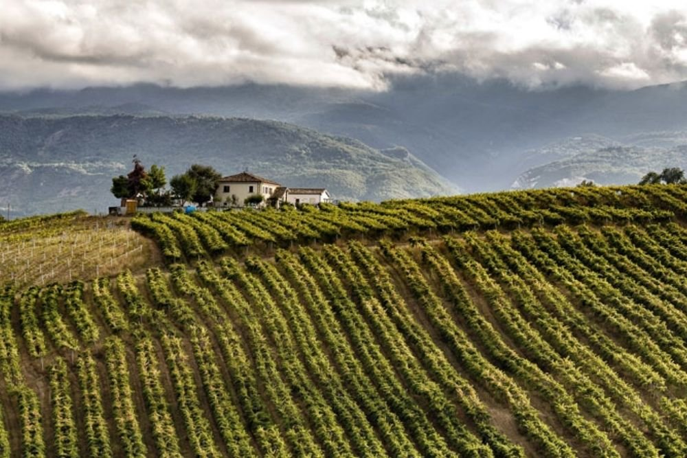 January's Wine of the Month: Montepulciano D'Abruzzo