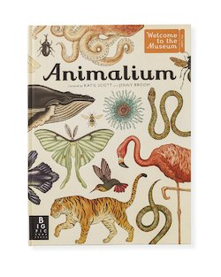Animalium by Jenny Broom